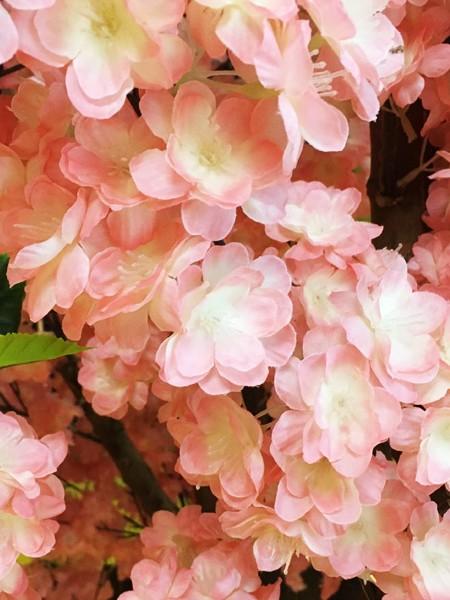Персик с шелковыми листьями