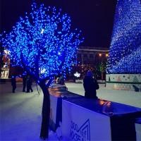 Масштабные яркие световые деревья