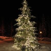 Уличные гирлянды для подсветки деревьев