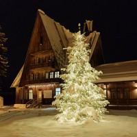 Светодиодные гирлянды для подсветки деревьев