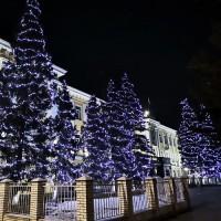 Оформление деревьев светодиодным клип лайтом