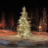 Клип-лайт - светодиодная гирлянда для деревьев