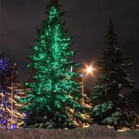 Светодиодная подсветка деревьев