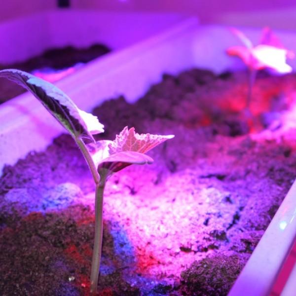 Светильник светодиодный AS-Т/8-ФИТО 14Вт 230В IP40 1120мм для роста растений