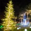 Световая подсветка деревьев